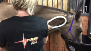 Woman Using PEMF on Horse